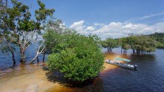 Amazonie : Manaus et croisière sur le Rio Negro