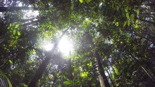Balade dans la forêt amazonienne au Brésil