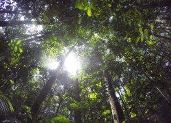 Foret amazonienne au Brésil