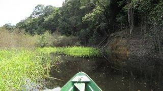 Navigation sur une pirogue en Amazonie au Brésil