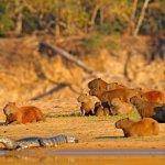 La faune du Brésil