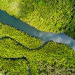 Rivière et mangrove en Amazonie brésilienne