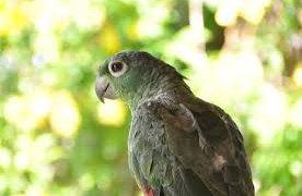 Oiseau du Brésil
