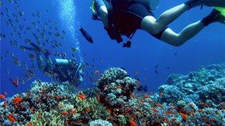 Plongée à Fernando de Noronha au Brésil
