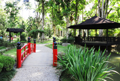 jardin botaique de Rio de Janeiro au Brésil