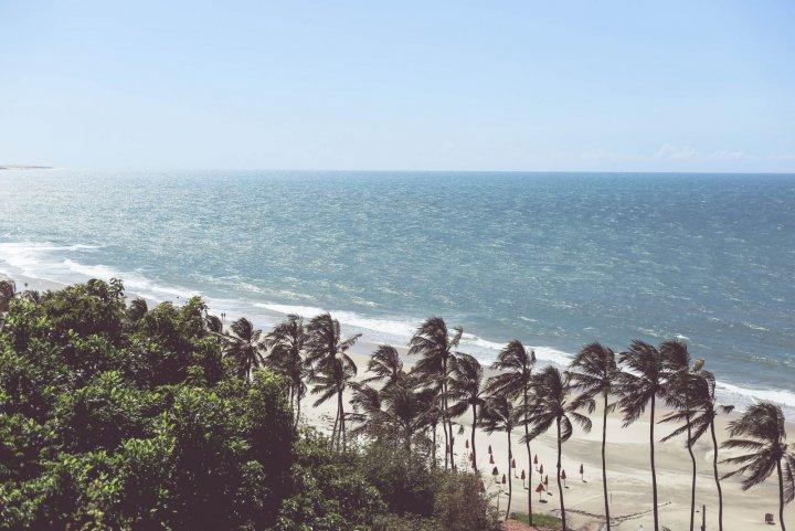 Les palmiers le long de la plage sur la route de Jericoacoara au Brésil